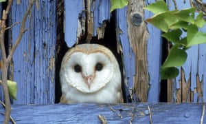 A barn owl causes the plot to take flight in the Tordays' novel