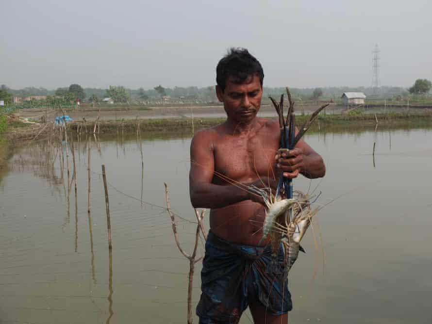 Shrimp farmer in Bangladesh