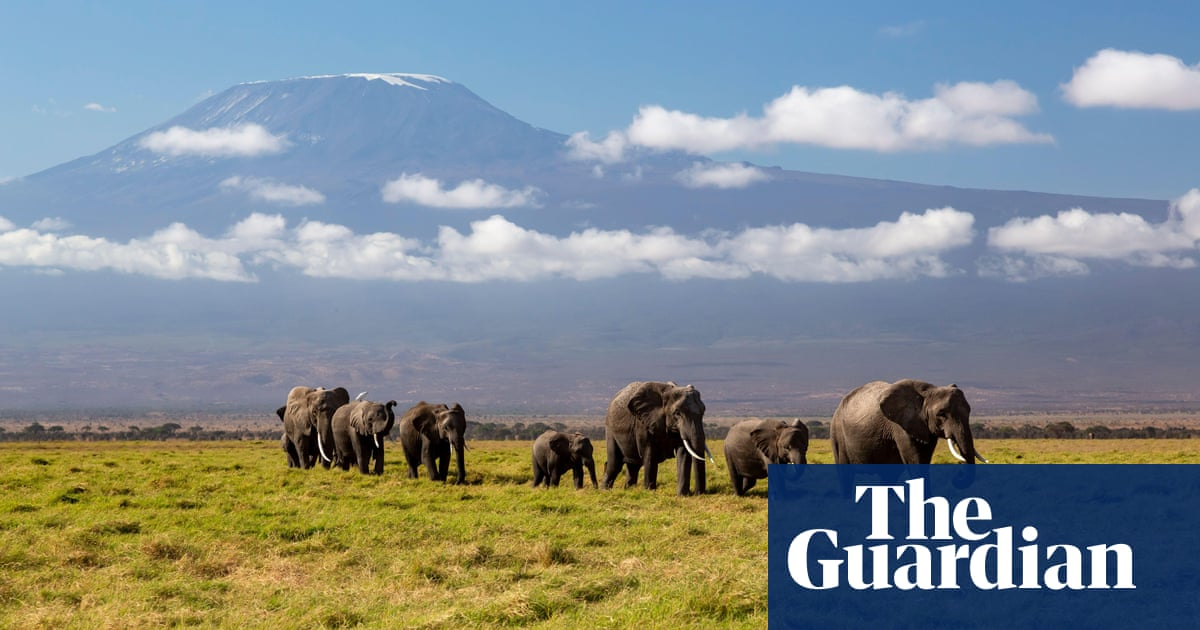 'Ecological island': as Maasai herding lands shrink, so does space for Kenya's elephants
