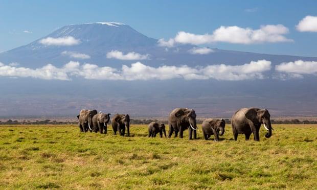 'Ecological island': as Maasai herding lands shrink, so does space for Kenya's elephants