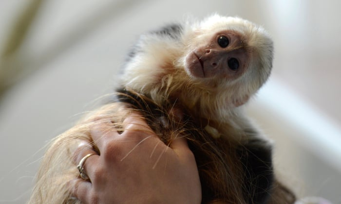No more monkey business: why primates should never be pets