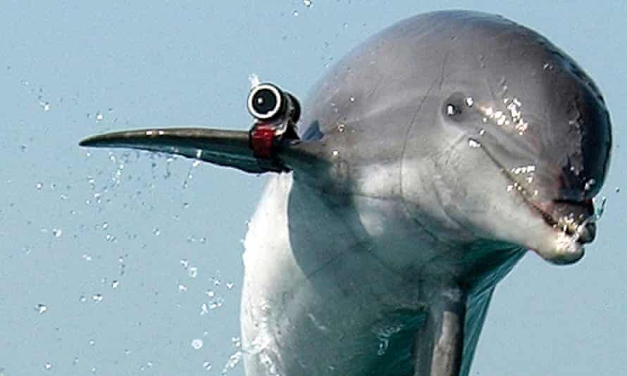 Combat dolphin leaps out of the water