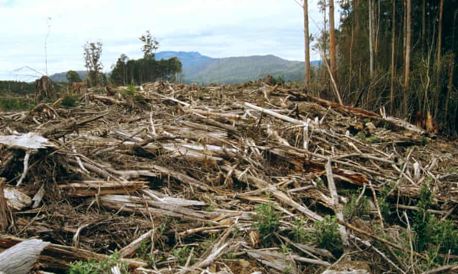 Clear-felling within a few hundred metres of the Meander Valley Forest Reserve in Meander Valley, Tasmania