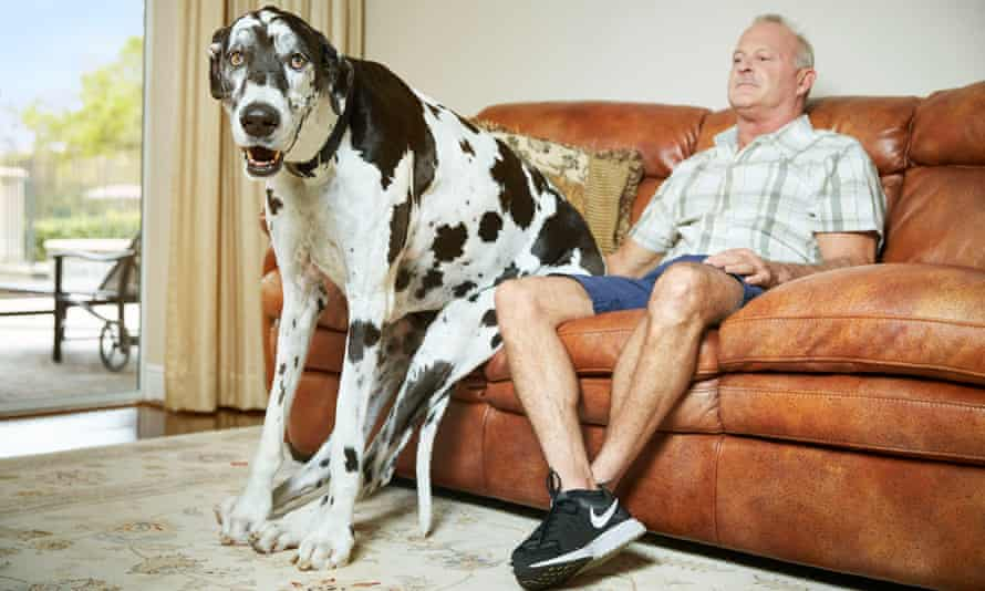Lizzy, the Great Dane from Florida with owner Greg.