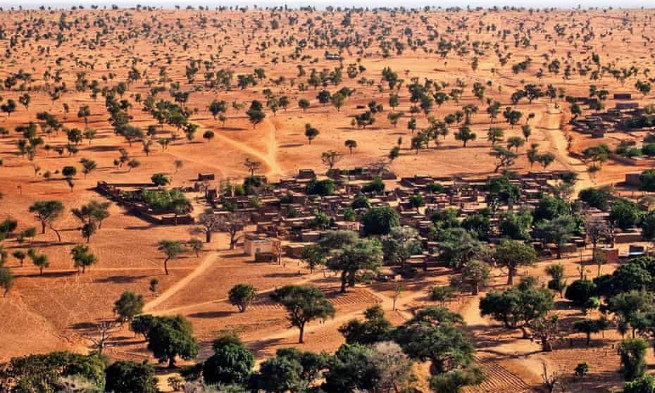 Aerial view of trees in Sahel: 'Where no one would expect to find many trees, there were quite a few hundred million.'