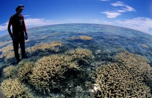 Dr Peter Harrison of Southern Cross University with bleached coral of the Great Barrier Reef