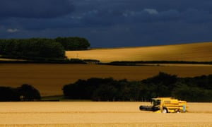 A combine harvester in a field of barley near Salisbury, Wiltshire.