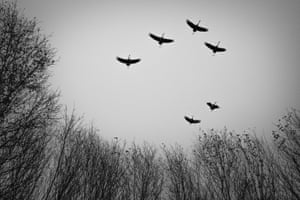 Six cranes seen from directly below, black and white