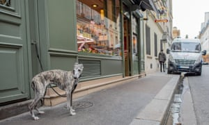 The lifting of the park ban is the first step in making Paris more dog-friendly, says deputy mayor Pénélope Komitès.