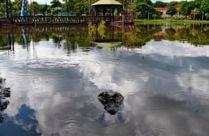 A cayman at a lake in Ita, Paraguay