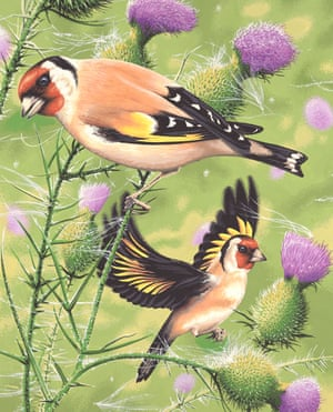 goldfinches on thistles by neil gower