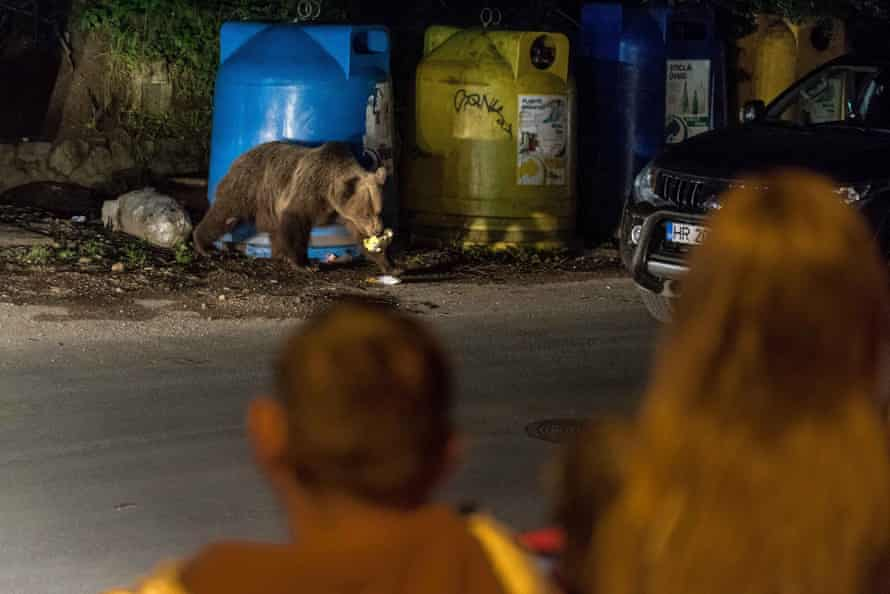 Foraging bears on the streets of a town at night.