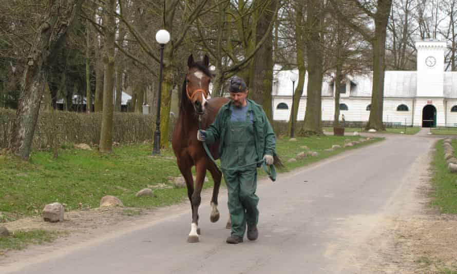 A Janów Podlaski stud staff member leads a horse away.