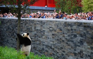 Visitors watch new arrival, giant panda Wu Wen at the Ouwehands Zoo in Rhenen City, the Netherland
