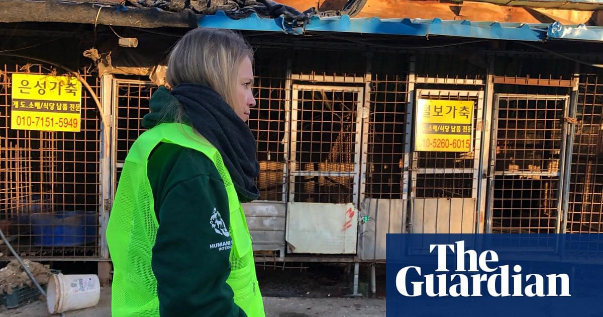 South Korea closes dog slaughterhouse amid activist pressure