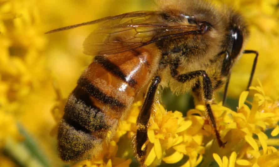 'Our tidy, pesticide-infused world is hostile to most insect life.'