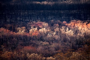 The Australian bush takes on a new life and colour about six weeks after the devastation of the Sir Ivan bushfire in northern NSW