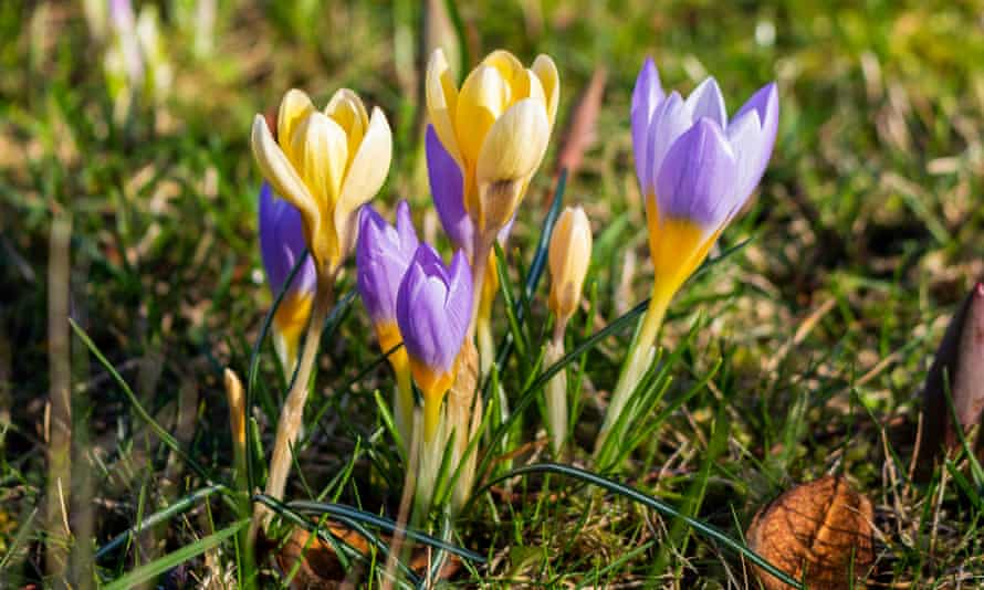 It is a little puzzling': readers on early signs of spring | Spring | The  Guardian