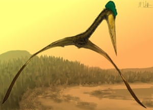 The largest pterosaurs had a wingspan in excess of 10 m and a large head on a long neck but were lightly built