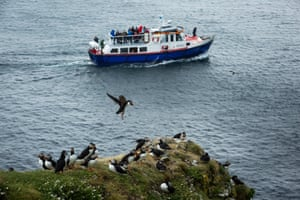 small boat sails past a flying puffin with others perched on a cliff