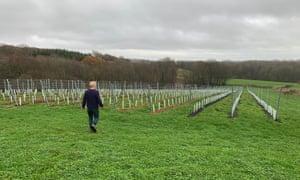 Ben Walgate's Tillingham Wines vineyard