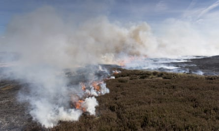 Heather burning on a grouse moor