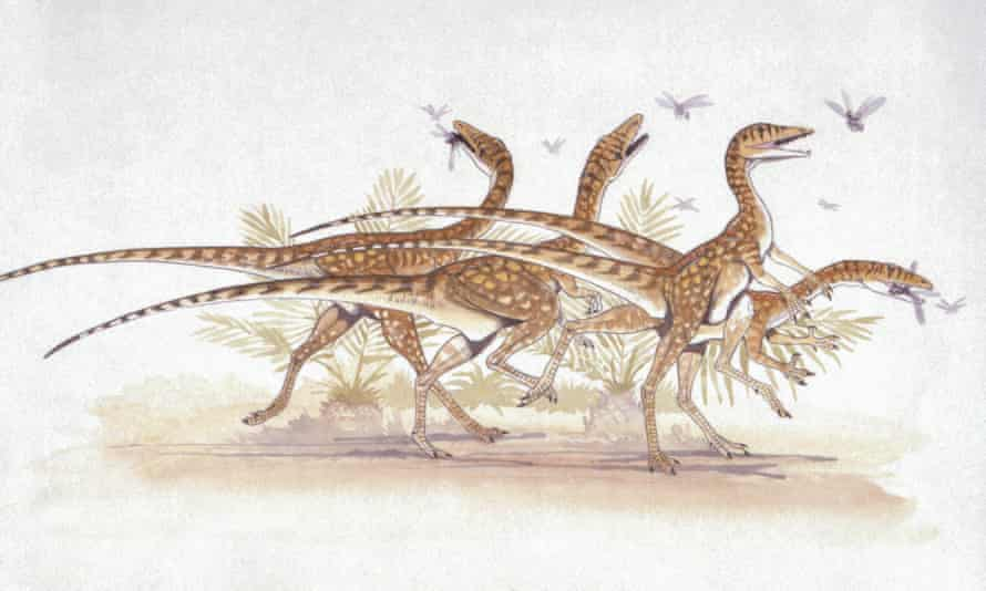 Reconstruction of Triassic Scottish dinosaur named Saltopus.