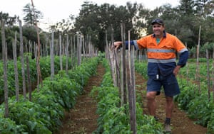 Local farmer Matt Biggs in his vegetable garden. He grows of the fresh produce consumed on the island