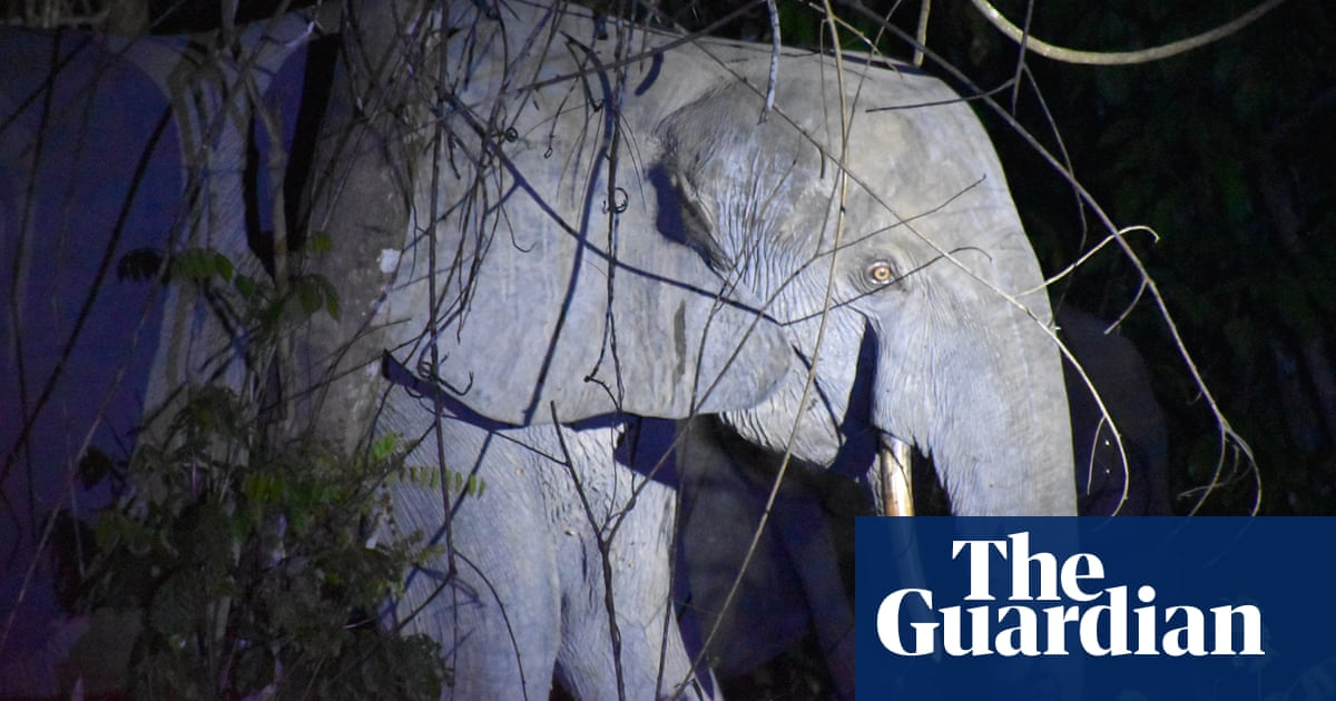 Shades of grey: how to tell African elephant species apart