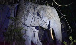 Forest elephants at night in Gabon