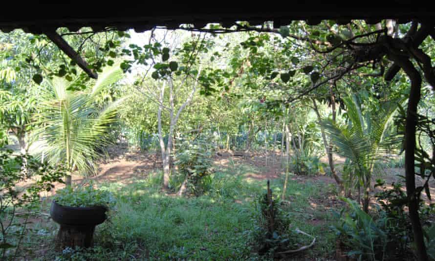 Green and shaded land at Mario Lago
