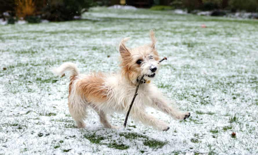 Dilyn the dog pictured playing in the snow