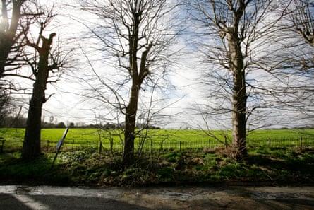 Winter trees around a green field