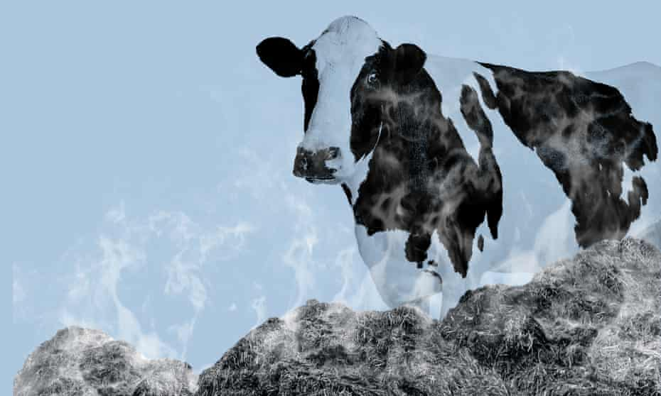 The UK's cows produce 36m tonnes in waste every year