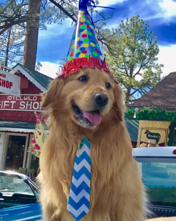 Mayor Max of Idyllwild, California, is a golden retriever on a mission for world peace.