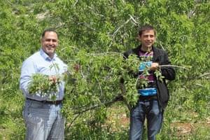 Samer Jarrar and Mohammad Irshaid inspect an almond tree.
