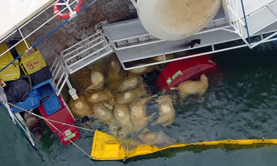 Livestock vessel Queen Hind capsized off Romania, leading to the deaths of more than 14,000 sheep.