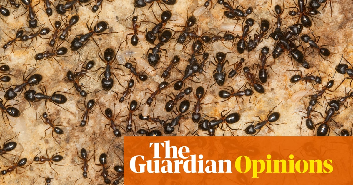 Politicians are complicit in the killing of our insects – we will be next | Molly Scott Cato