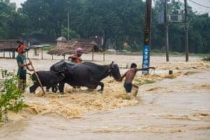 Young men move their buffalos through rushing floodwaters in Birgunj Parsa district, south of Kathmandu