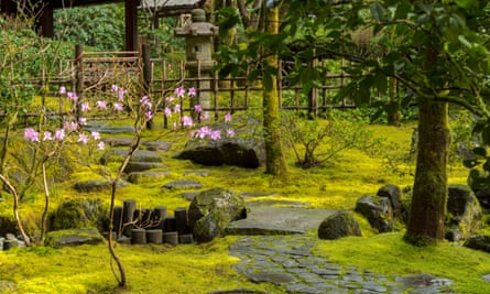 Zen tranquillity: add some stepping stones and a few suitable plants to your moss and all of a sudden it's a lovely Japanese garden.