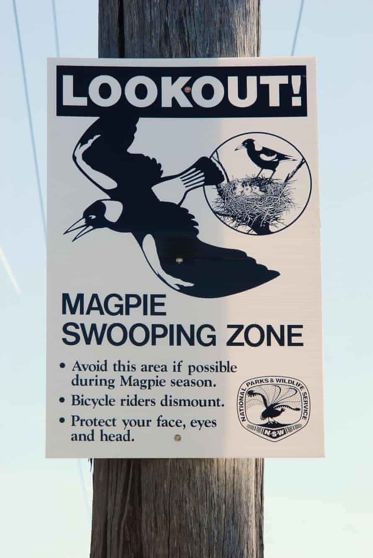Australian Magpie warning sign