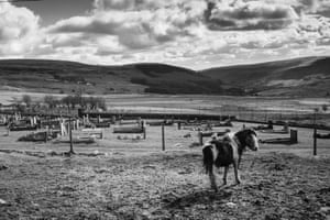 A Welsh pony in front of a graveyard above New Tredegar, Rhymney Valley