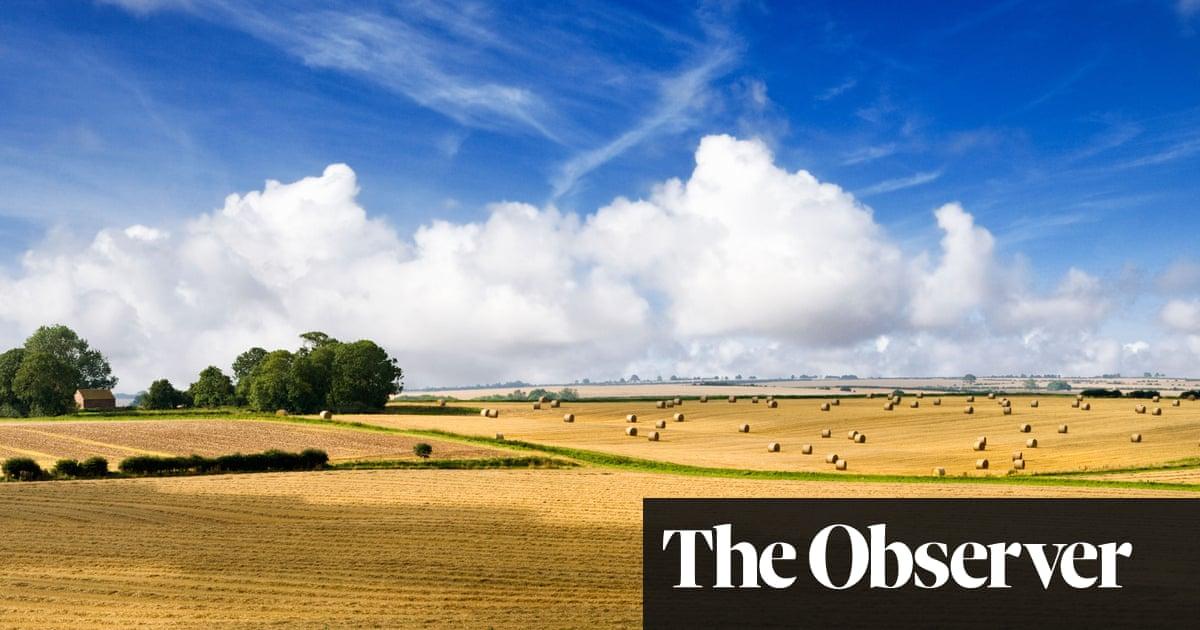 Hares, cranes, bitterns: small triumphs in the battle to rewild Britain's landscape