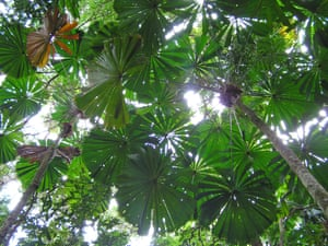 Extreme heat in the wet tropics world heritage area poses an immediate threat to endemic species.