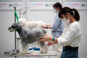 Dog groomers participate in a contest
