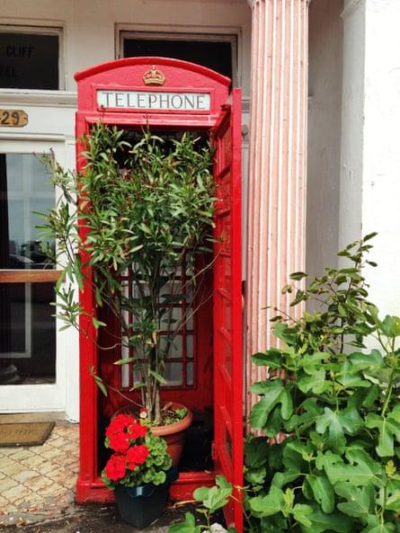 Urban gardening in Dover.