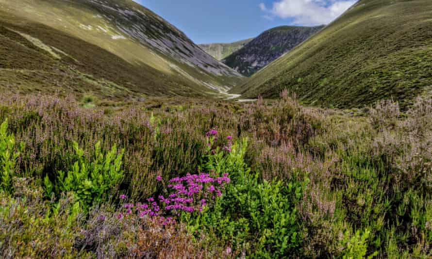 Heathers and blaeberries at the entrance to Coire Garbhlach.