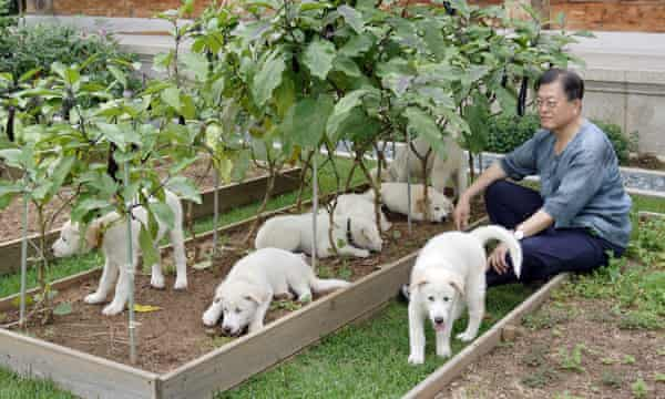 South Korean President Moon with puppies