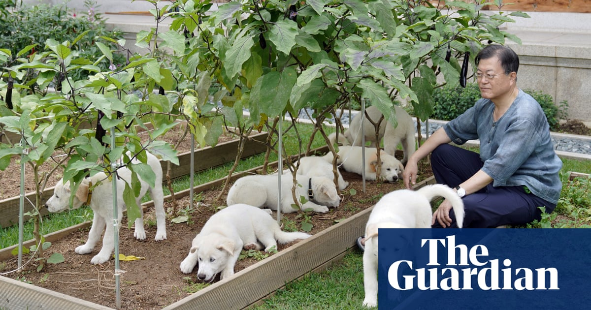 South Korean president suggests ban on eating dog meat