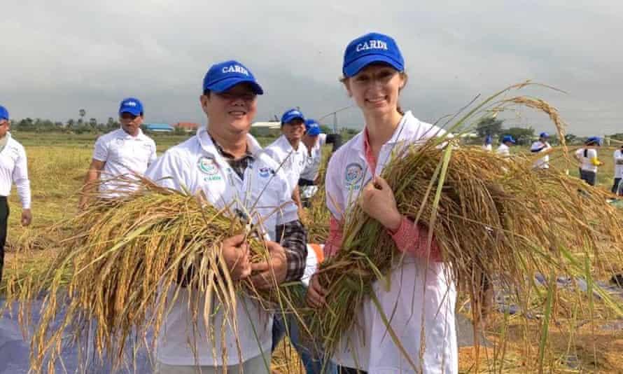 Rice farmers in Cambodia